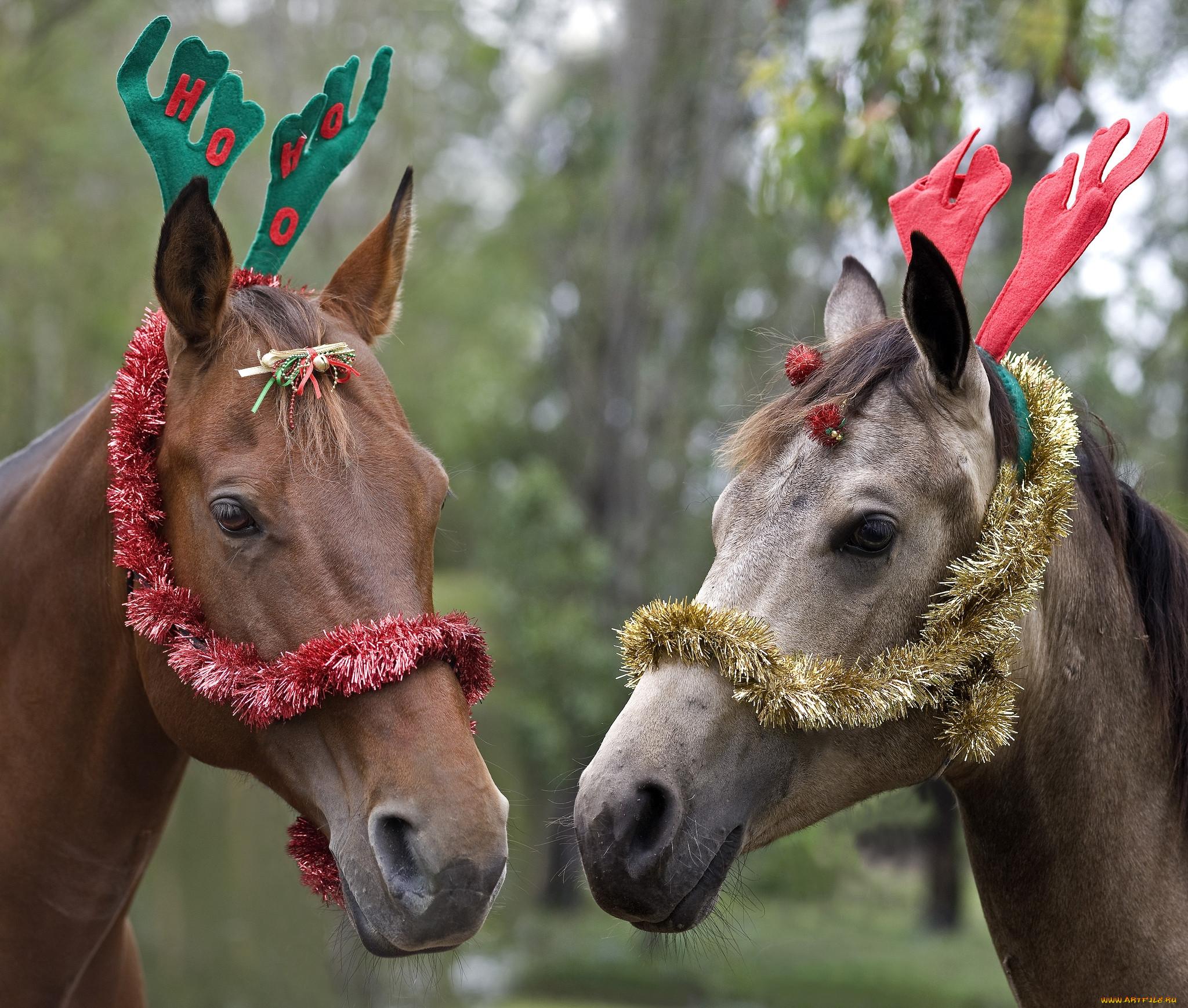 днем приколы картинки с лошадями понимать